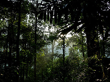Asienreisender - Rainforest in Khao Sok National Park, Thailand
