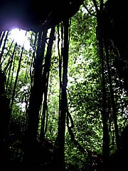 Asienreisender - In the Rainforest