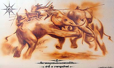 Elephant Fight, Phitsanulok