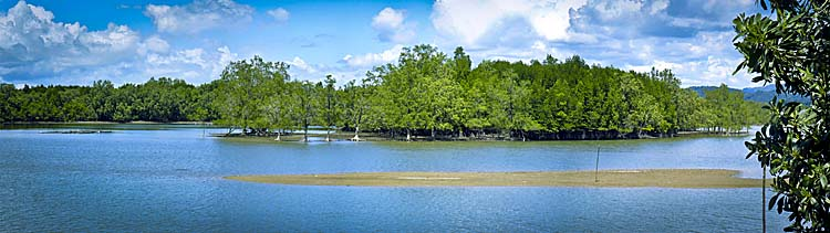 Ranong's Mangrove Forests