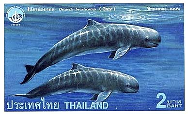 Thai Stamp of an Irrawaddy Dolphin