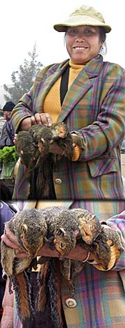 Market Woman selling Squirrels by Asienreisender