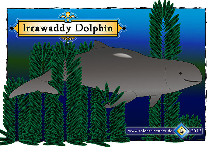 Sketch of an Irrawaddy Dolphin by Asienreisender