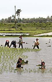 Peasants working in the rice paddies by Asienreisender