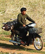 Pig on a Motorbike in Cambodia by Asienreisender
