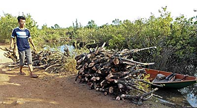 Mangrove Wood as Firewood by Asienreisender