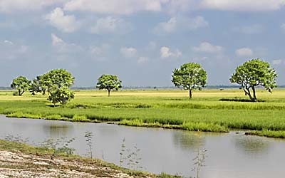 Plains of the Mekong Delta at Dry Season by Asienreisender