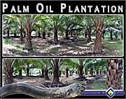 'Palm Oil Plantations in Southeast Asia' by Asienreisender