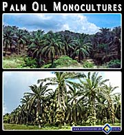 'Palm Oil Monocultures in Southeast Asia' by Asienreisender