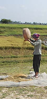 Rice Processing on the Field by Asienreisender