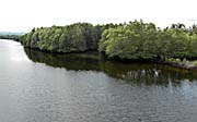 'Mangrove Forests at a River in Sihanoukville' by Asienreisender