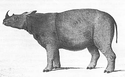 'Sumatran Rhinoceros' by Bell, 1793