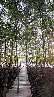 'Inside the Mangrove Forest' by Asienreisender