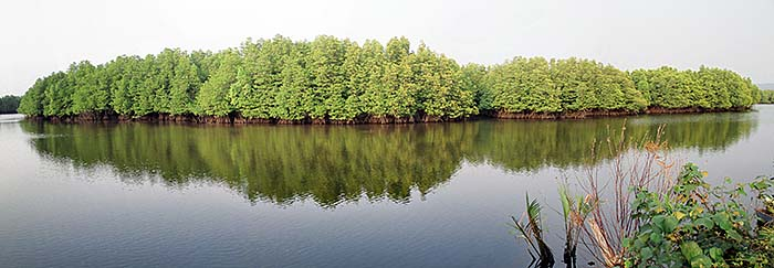 'A Mangrove River Landscape around Koh Kong, Cambodia' by Asienreisender