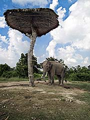 'An Elephant in Ban Khwao Sinarin' by Asienreisender