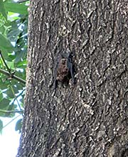 'A Bat at a Tree in Surin City' by Asienreisender