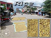 'Rice Corns, Drying on the Street' by Asienreisender