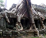'Roots of a Giant Figtree in the Roof and Walls of Preah Khan' by Asienreisender