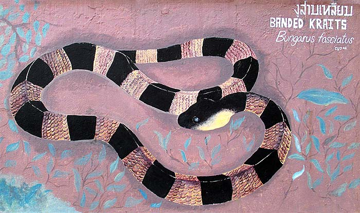 'Painting of a Banded Krait at the Walls of Dusit Zoo in Bangkok' by Asienreisender