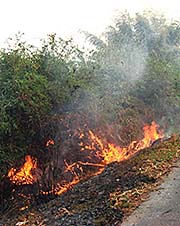 'Out-of-Control Bush Fire around Mae Salong | Santikhiri' by Asienreisender