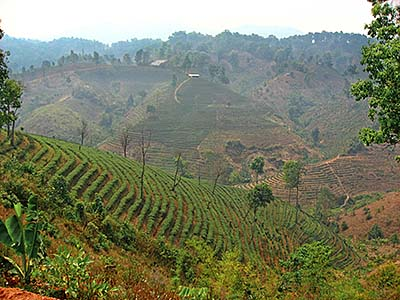 'The Tea Plantations of Mae Salong | Santikhiri' by Asienreisender