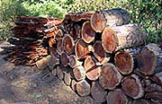 'Cut Wood, Piled up in the Forest around Muang Noi' by Asienreisender