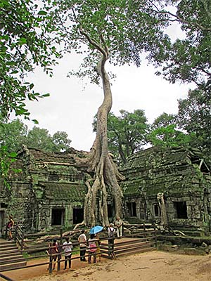 'A Huge Figtree in Ta Prohm | Angkor Archaeological Park' by Asienreisender