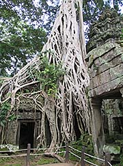 'Giant Figtree in Ta Prohm' by Asienreisender