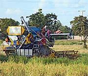 'Rice Harvest with a Harvester' by Asienreisender