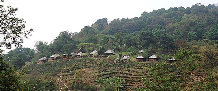 'A Tourist Resort with Bungalows inside a Tea Plantation at Mae Salong | Santikhiri' by Asienreisender