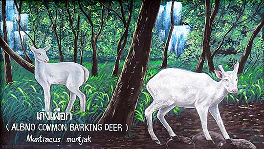 'Painting of Barking Deer | Indian Muntjac' by Asienreisender