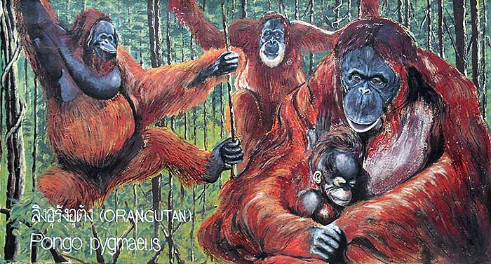 'Borneo Orangutans | Painting at the Outer Walls of Dusit Zoo | Bangkok' by Asienreisender