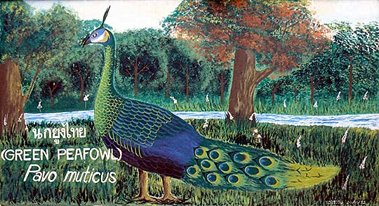'Painting of a Green Peafowl | Dusit Zoo | Bangkok' by Asienreisender