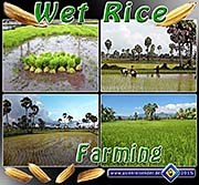 'Wet Rice Farming' by Asienreisender